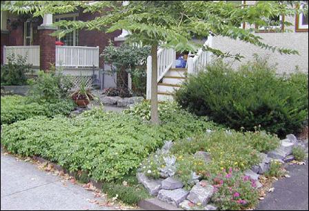 Forum un jardin blanc dans l 39 oise forum blog de jouy sous thelle - Plante couvre sol sans entretien ...