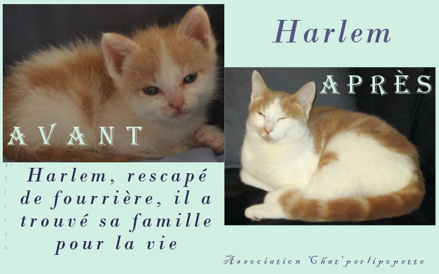 Les avants/après des chats adoptés ou en FA définitive Harlemap-3e06c94
