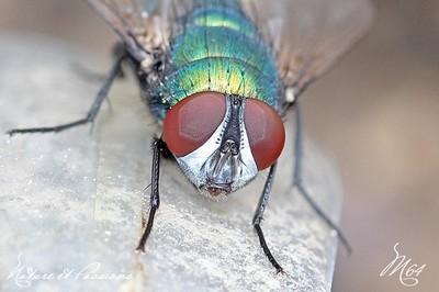Compil .... les mouches par M64  23 novembre 2013 Img_1685-424cdda