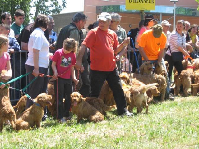 Le forum chasse et chien salon chasse p che nature de - Salon de la chasse saint gely du fesc ...