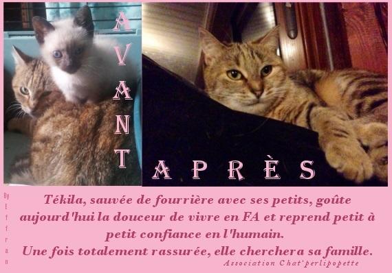 Les avants/après des chats à l'adoption T-kila-4231c5b