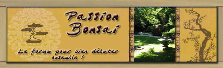 PASSION-BONSAI-Le forum pour bien débuter ensemble! Forum Index