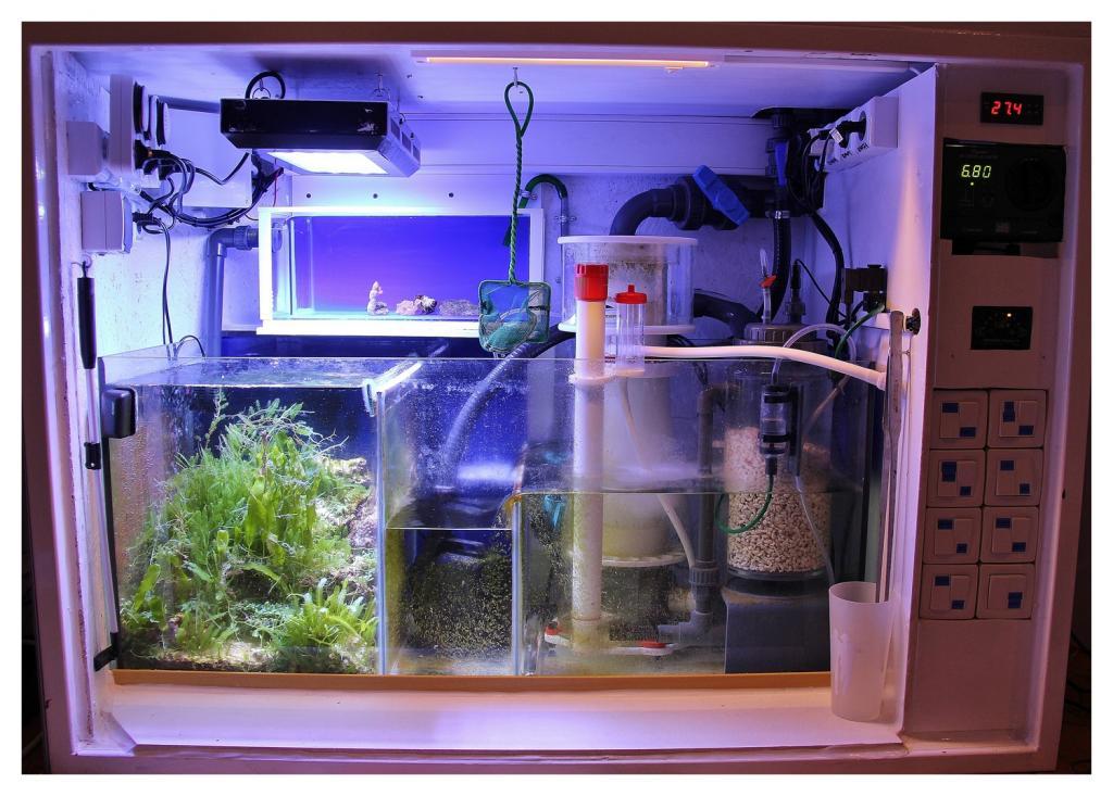 aquario philrecifal bac 224 boutures dans le meuble comment le raccorder au bac