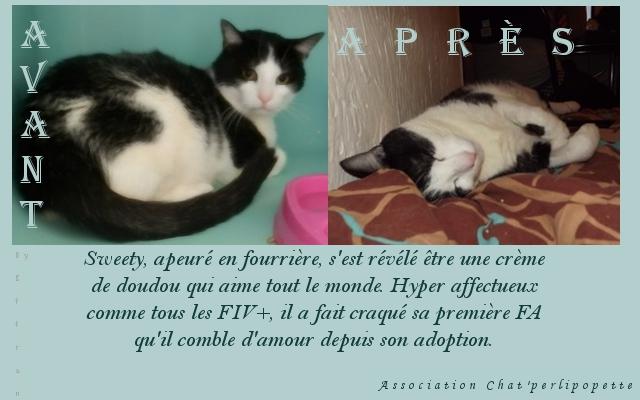 Les avants/après des chats adoptés ou en FA définitive Sweety-3fc1d93