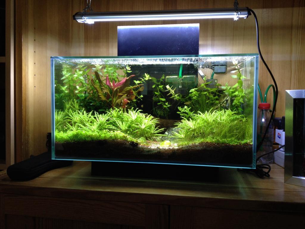 bodem planten aquarium