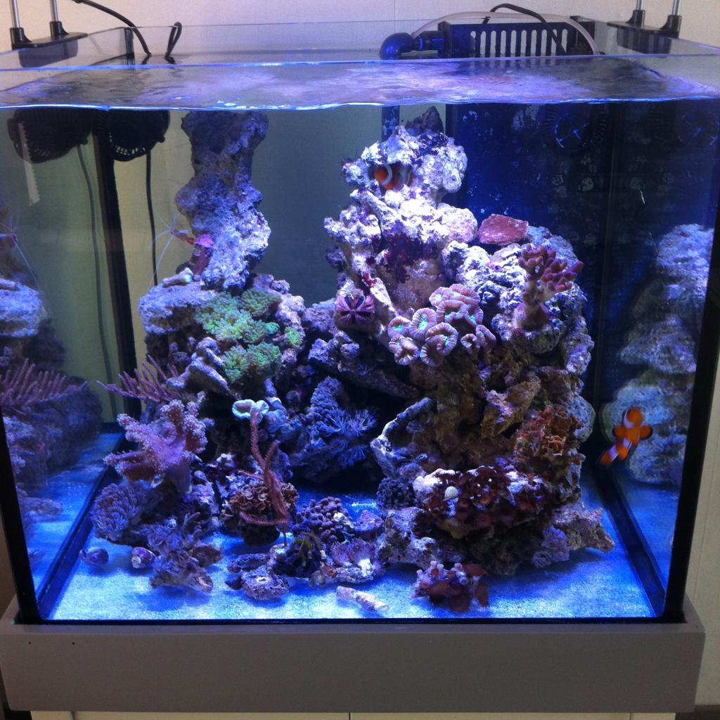 Aquarium eau de mer 75l for Aquarium de mer