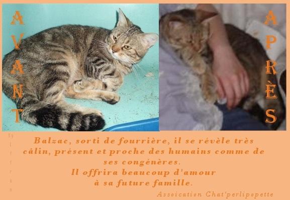 Les avants/après des chats à l'adoption Balzac-4231a45