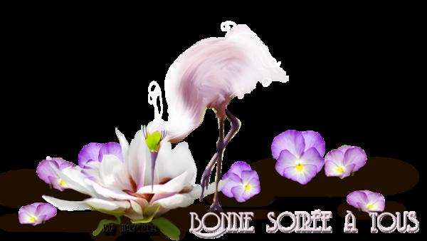 BONNE SOIREE DU JEUDI DU 17/04/2014 F1a26dfb-4206fb6