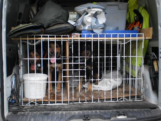 cage de transport pour chien fait maison avie home. Black Bedroom Furniture Sets. Home Design Ideas