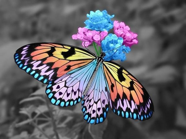 [Jeu] Association d'images - Page 18 Papillon-62-3be13e3